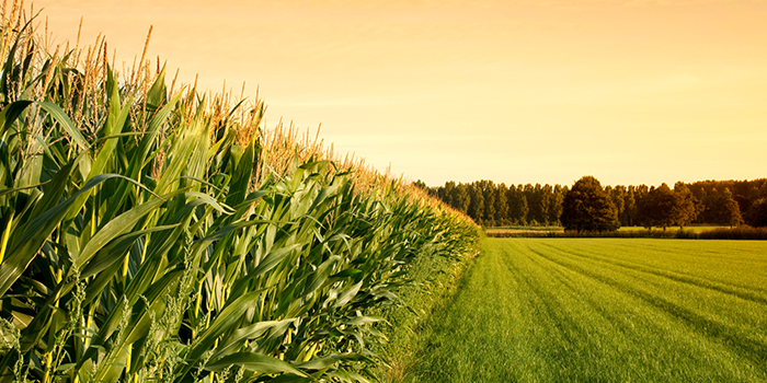 5 Crop Insurance Myths to Ignore