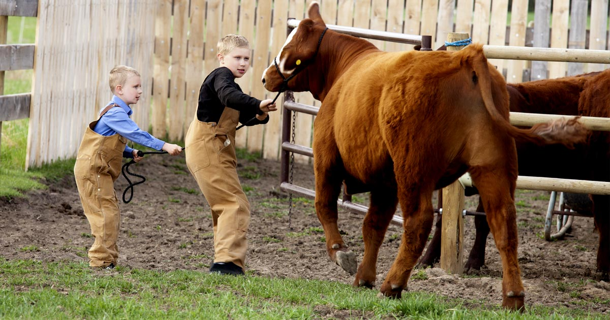 16 Signs You Grew Up on  a Farm or Ranch