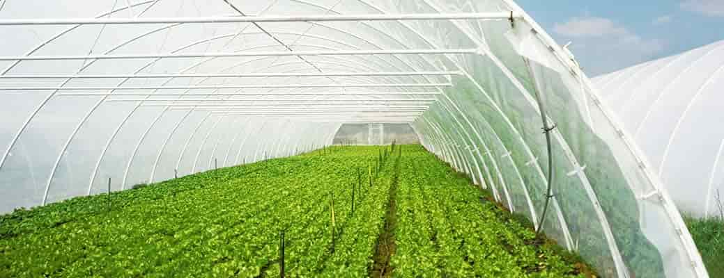4 Reasons High Tunnels Might Be Right for Your Small Farm header image