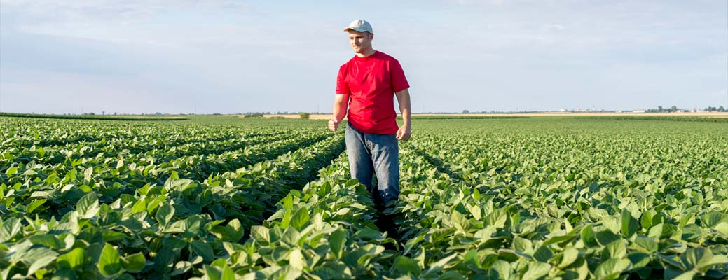 A young farmer inspects his crop of soybeans.