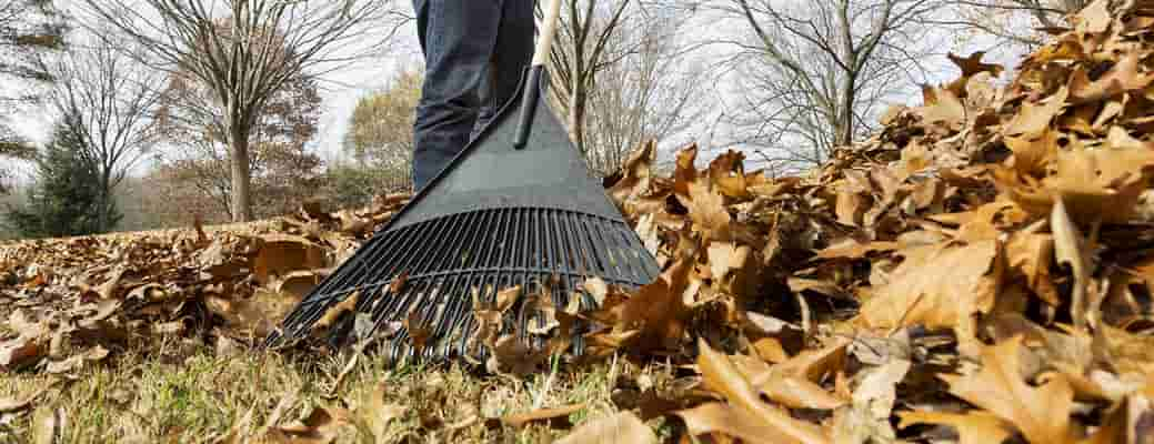 5 Things You Can Do with Fallen Leaves
