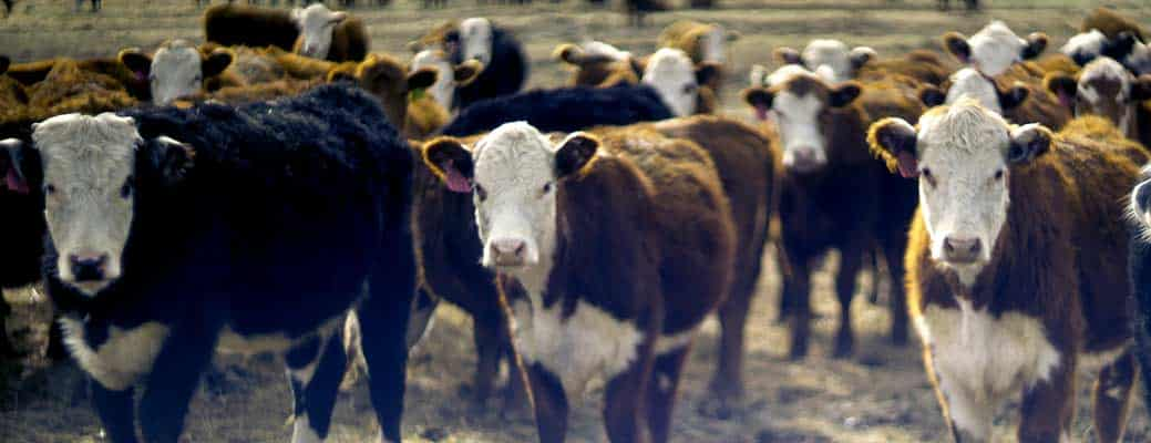 How to Protect Livestock From Predators: 6 Essential Tips thumbnail
