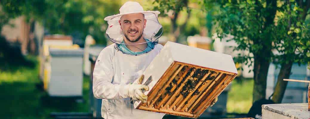 LCArticle_BecomeBetterBeekeeper