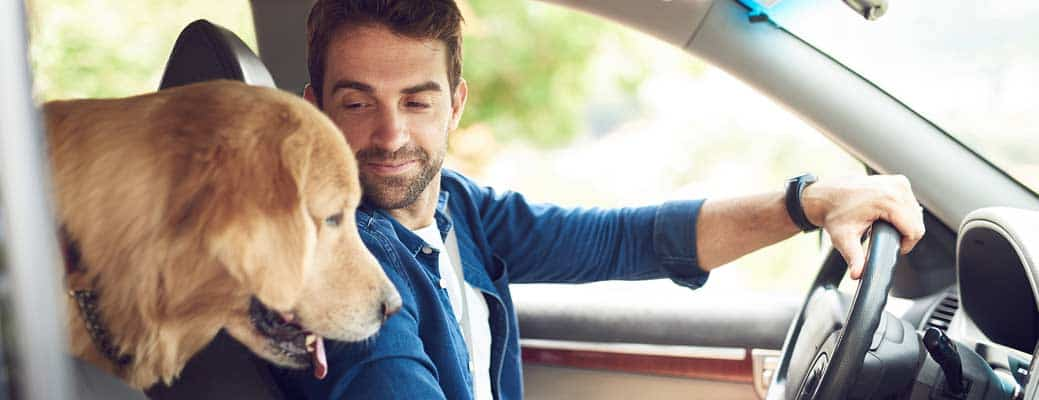 Buckle Up, Fido! Safety Tips for Driving with Dogs