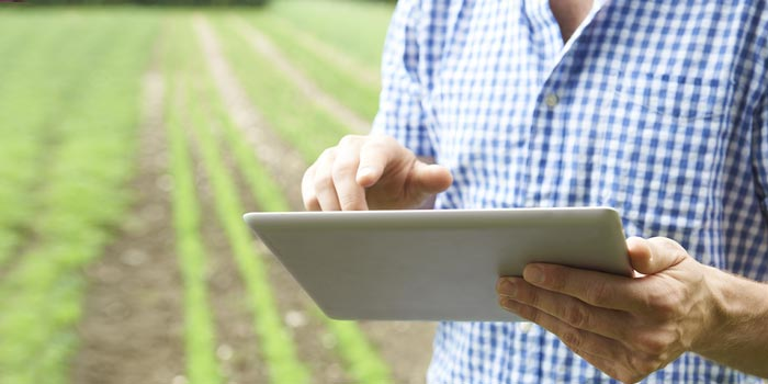 A farmer reading an electronic tablet while standing in a field.