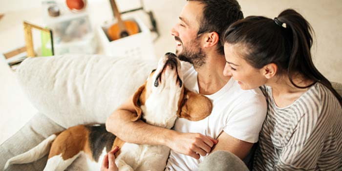 A young couple cuddle their new pet beagle on the couch.