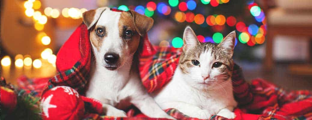 How the Holidays Make Your Pet Sick header image