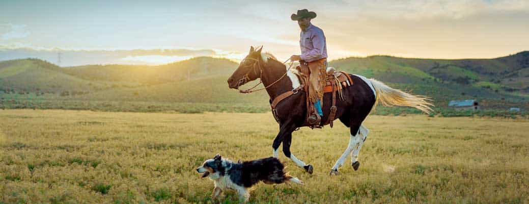 How to Create an Emergency Disaster Plan for Your Ranch or Farm