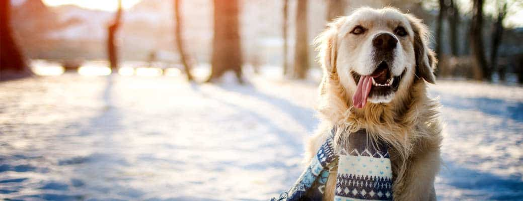 Keep Your Pet Safe During Cold Snaps header image