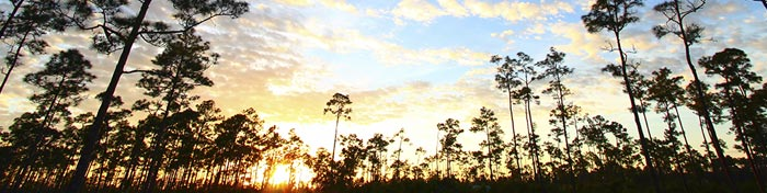 LCArticle_NationalParks_Everglades