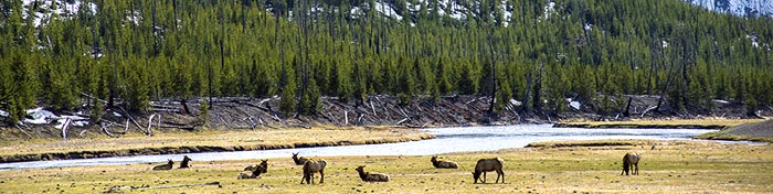 LCArticle_NationalParks_Yellowstone