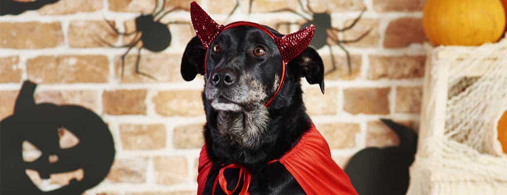 Halloween Pet Safety: 4 Rules to Follow