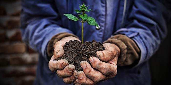 A man holds a handful of soil with a small plant growing in it.