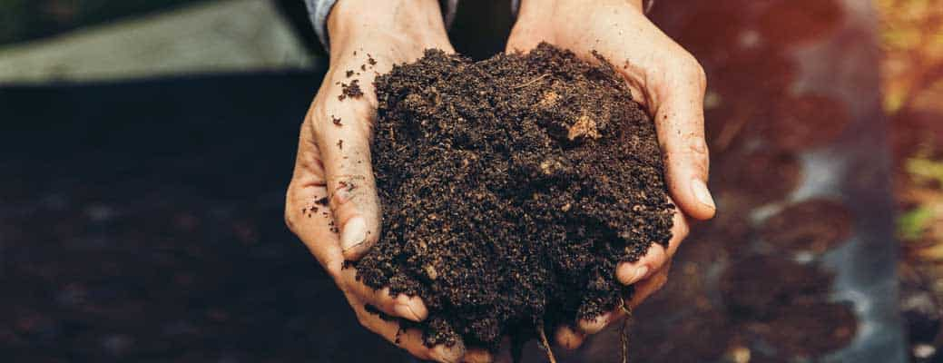 Why You Should Test Your Soil