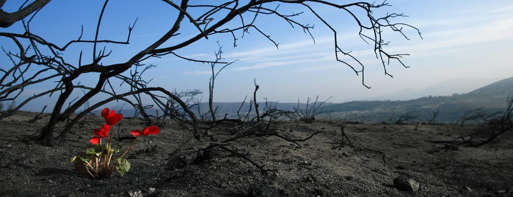 Wildfires: Evacuation and Recovery Tips header image