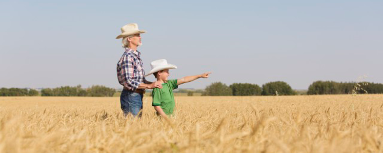 Farmer and son in field viewing wheat crop
