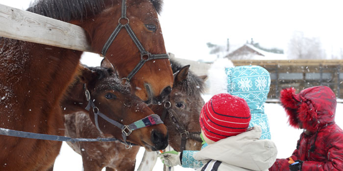 Top 10 Tips to Prepare Your Horse Farm for Winter header image